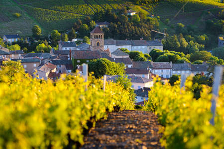 Village of Beaujolais and vineyards in France