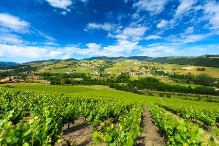 프랑스의 보졸레 (Beaujolais)의 테르 난 (Ternand)과 레트 라 (Letra) 마을의 포도원