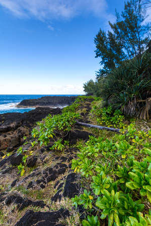 shorelines: Nature and volcanic rocks in the south coast of Reunion Island during a sunny day