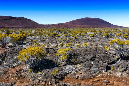 レユニオン島のピトン ・ デ ・ ラ ・ フルネーズ火山植生 写真素材