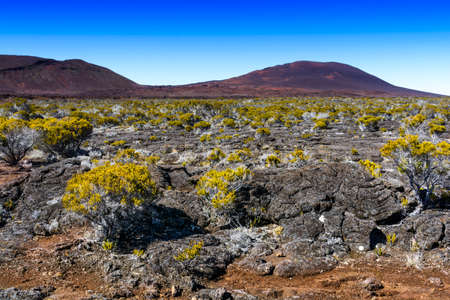 Volcanic vegetation, Piton de La Fournaise at Reunion Island