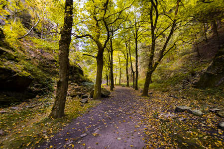 Underwood path with yellow leaves during fall