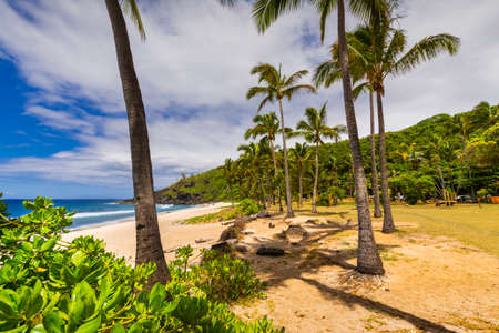 Sunny day with coconut and sand at Grande Anse Beach, Reunion Island