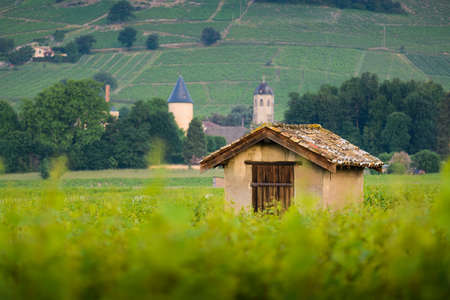 Hut in vineyards of Brouilly, Beaujolais, France