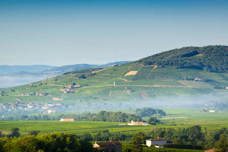 Brouilly hill and vineyards, Beaujolais, France 版權商用圖片