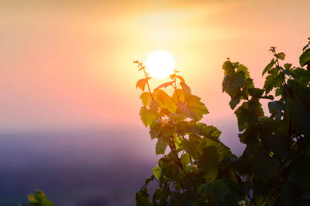 First lights over vineyards of Beaujolais, France