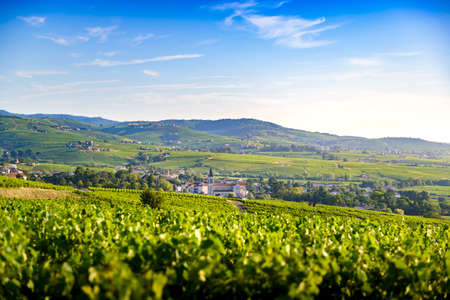 Landscape of vineyards and villages of Fleurie and Villi? ? Morgon, Beaujolais, France 版權商用圖片