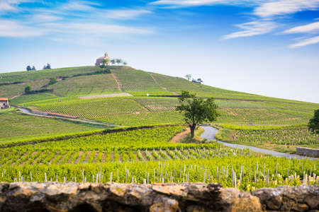 Church of Fleurie village and vineyards of Beaujolais, France Фото со стока - 131695505