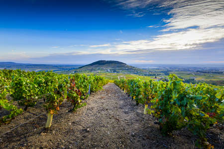 Landscape of Brouilly mountain and vineyards, Beaujolais, France Фото со стока - 131695542