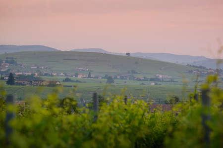 Morgon vineyards and landscape, Beaujolais, France