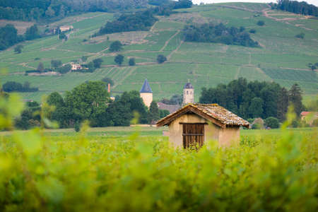 Hut in vineyards of Brouilly, Beaujolais, France Фото со стока - 131695643