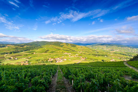 Landscape of Beaujolais with vineyards of Brouilly, France