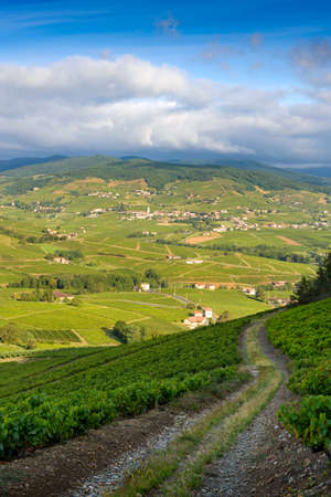 Landscape of Beaujolais with vineyards of Brouilly and Quincie village, France