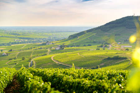 Landcape with morning lights over vineyards of Brouilly, Beaujolais, Franvce Фото со стока