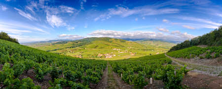 Panoramic view of landscape of Beaujolais from Brouilly hill, Beaujolais, France Фото со стока