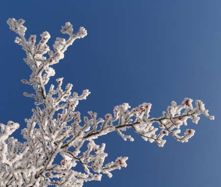 hoar: Hoar frost covering bare tree branches on a Winters day Stock Photo