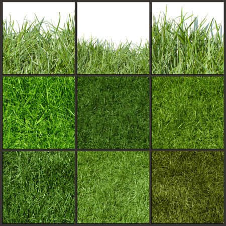 sports field: Collection of green grass texture, close up