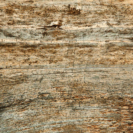mangy: Grunge wood texture. Pattern of old weathered timbered wall