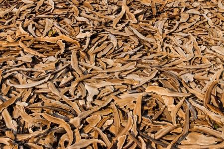 Lots of dry lingzhi mushroom at a mushroom farm photo