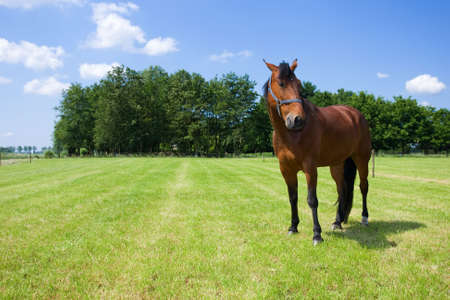 Horse in the open field Stock Photo