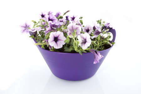 Purple flowers in a basket in a white background.