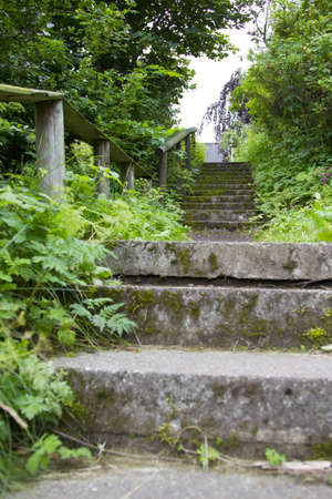 Concrete stairs with surrounded by nature photo