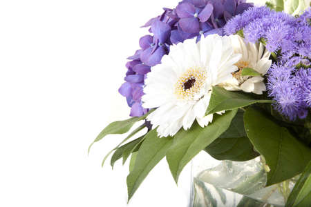 Nice purple and white flowers on a white background. photo