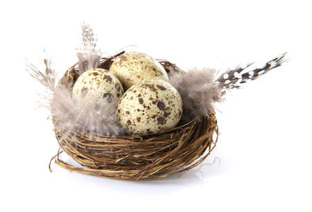 Birds nest with eggs on a white background.