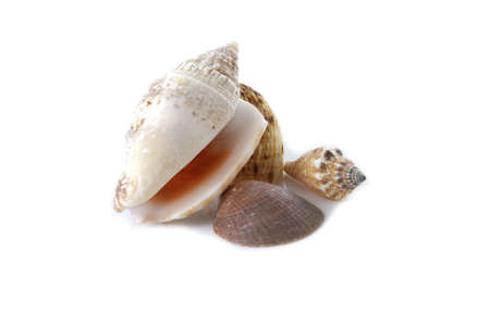 Several sea shells on a white background. Stock Photo