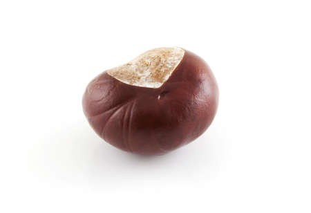 Single chestnut on a white background. Stock Photo