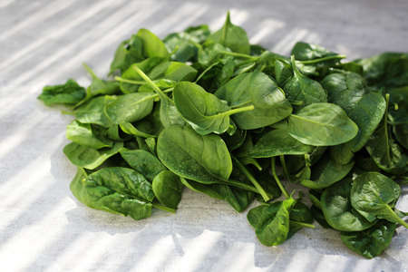 Green young spinach leaves on a light background, horizontal composition with space for text. 写真素材 - 121433157