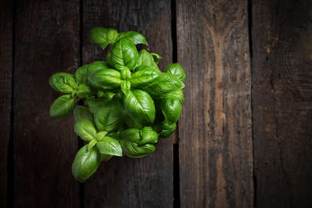 Basil seedling, herbs on a wooden background, horizontal shot, top view with space for text 스톡 콘텐츠