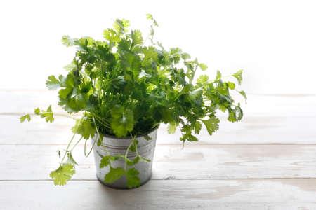 Fresh herbs in a pot. Coriander Zdjęcie Seryjne