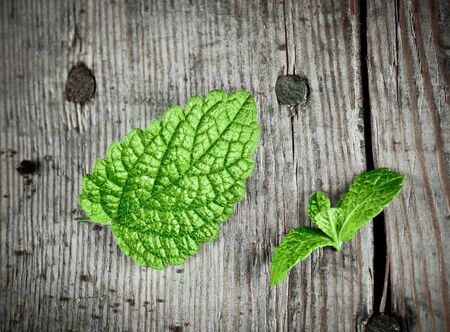 spearmint: Fresh green spearmint on a wooden plate. Stock Photo