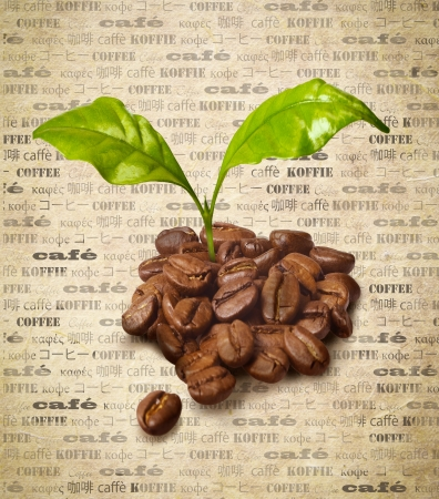 Coffee beans with fresh growing green leaves on a backround of aged paper with the word coffee repeated multiple times in different languages photo