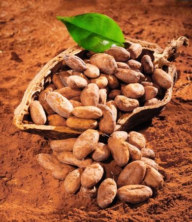 ココア: 粉末ココア背景に新鮮な緑の葉とココア豆