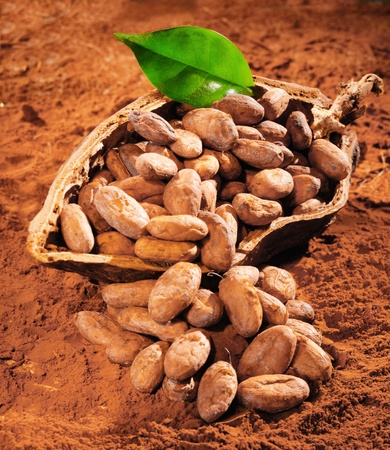 Cocoa Beans with a fresh green leaf on a powdered cocoa background