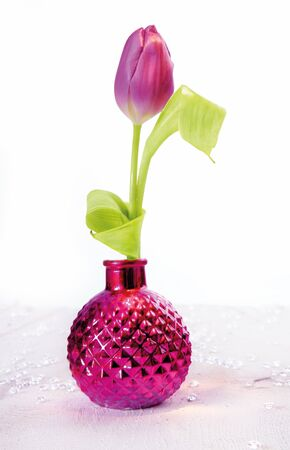 Single pink tulip flower in an irridescent pink vase on a white background Stock Photo - 12640231