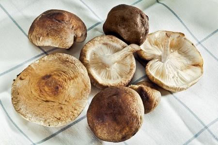 Shitake Mushrooms on a towel for Organic food concepts Stock Photo - 12926850