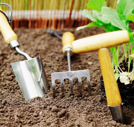 Garden tools for transplanting seedlings and weeding of smaller areas such as a herb garden photo