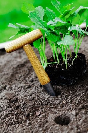 Dibber an some plants in a garden patch before planting Stock Photo - 13753279