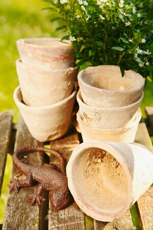 herbary: Old decorative terracotta Plant Pots on a vintage wooden background with a lizard