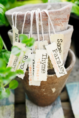 Some different Herb labels hanging on vintage plant pots.