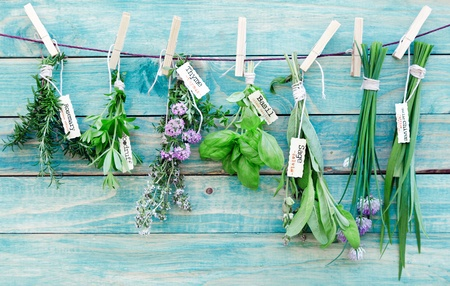medicinal: Assorted hanging Herbs on an old and vintage wooden blue background, for seasoning concept.