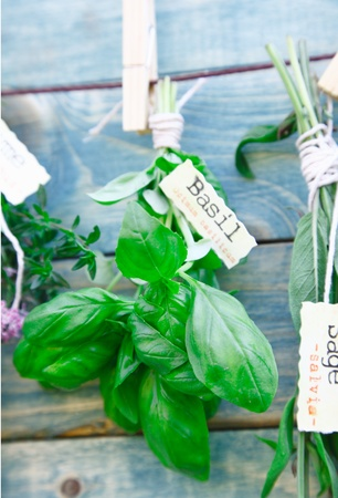 urban gardening: Hanging labeled fresh green Basil in front of a wooden blue background