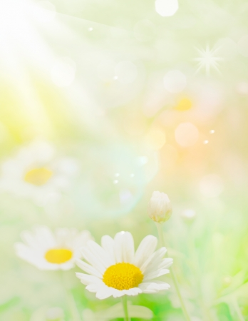 Blurry Flowers with pastel colors and defocused elements for floral concepts Stock Photo - 13787256