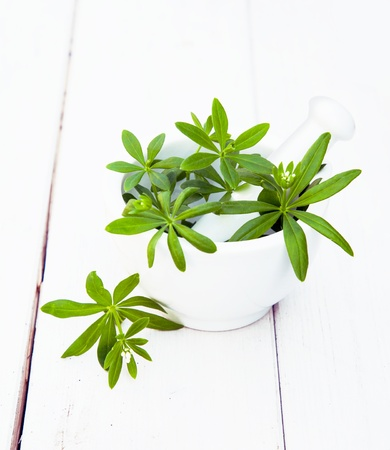 sweet woodruff: Sweet Woodruff in a mortar with a pestle on a white wooden background for food ingredients concepts Stock Photo