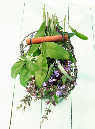 Fresh Flowering sage in a wire basket on bright and wooden background. For blooming herbs concepts Stock Photo - 13864242
