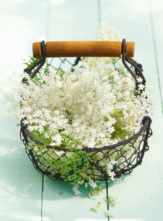 Flowering and Blooming Elder Flowers and leaves in a wired basket on wooden background. For Food ingredient concepts. Stock Photo - 13864245