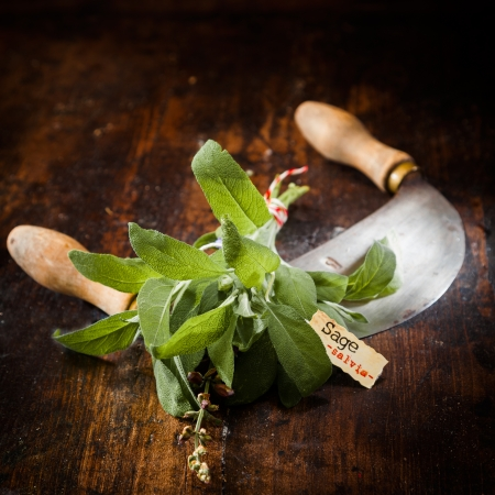 Labeled Sage with a chopping knife on a vintage wooden background Stock Photo - 13864237